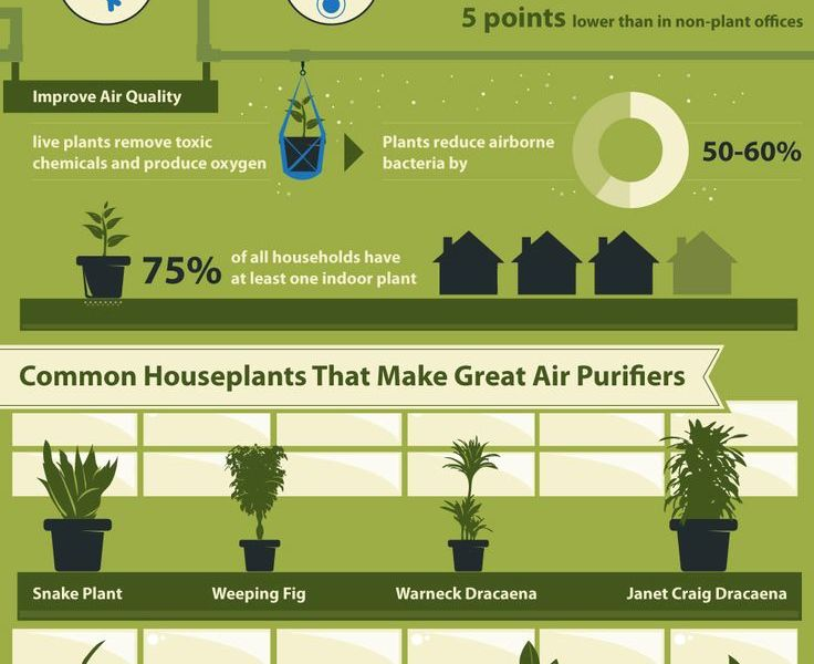 Pflanzen erhöhen die Produktivität am Arbeitsplatz